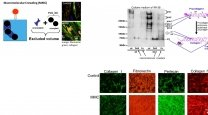 Tissue Engineering for Regenerative Medicine